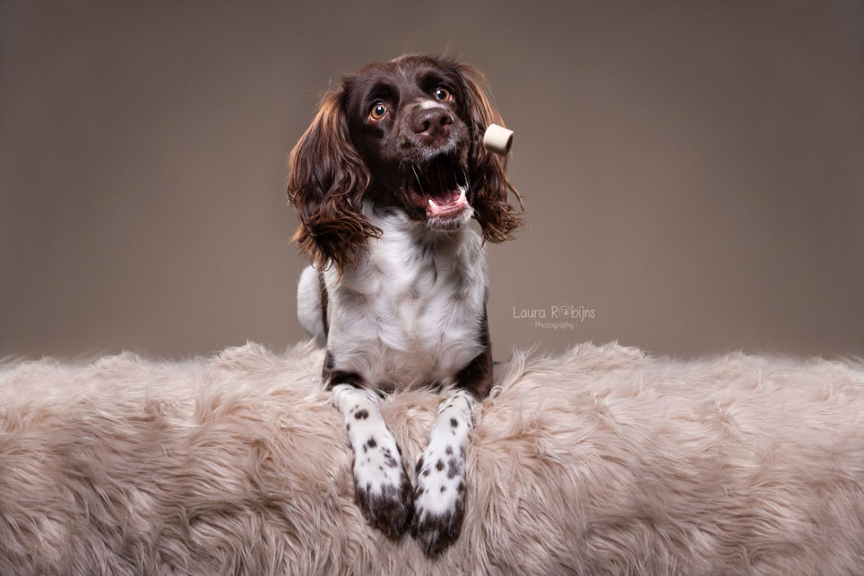 catch a treat hond fotografie