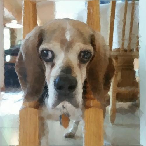 Jack in railings 15wol
