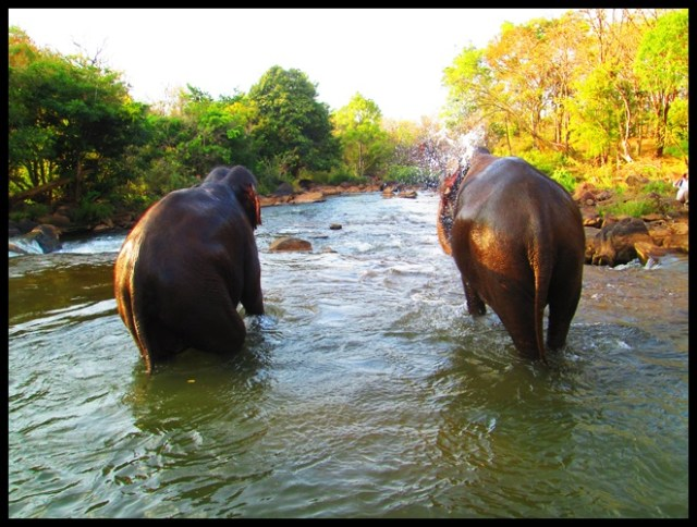 7. tad lo elephants laos (1)