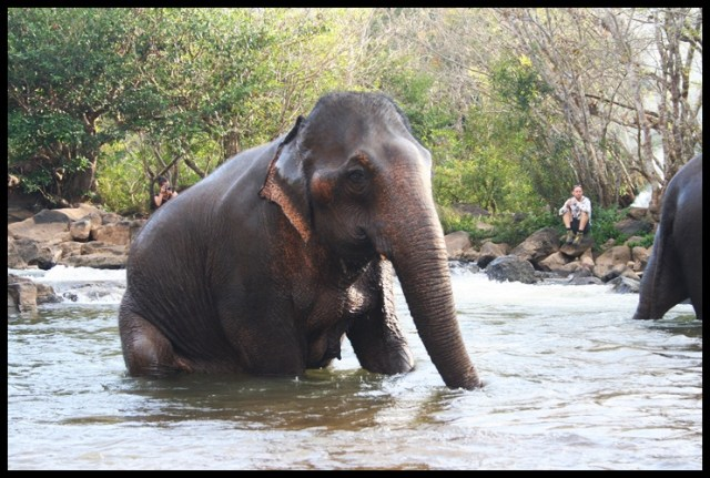7. tad lo elephants laos (4)