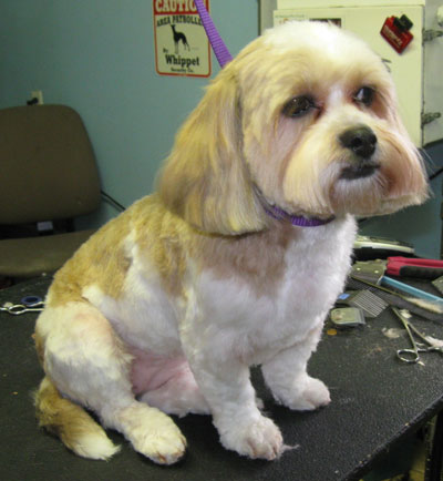 Before Amp After Photos Laurels Pet Grooming