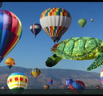 Happy Flying Turtle Video