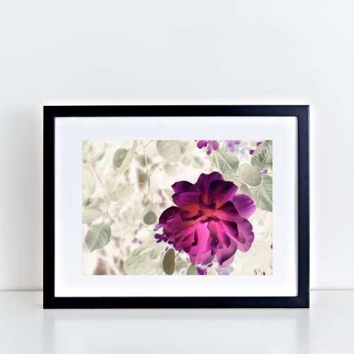 Magenta Rose Art Print - Lauren Skye Studio