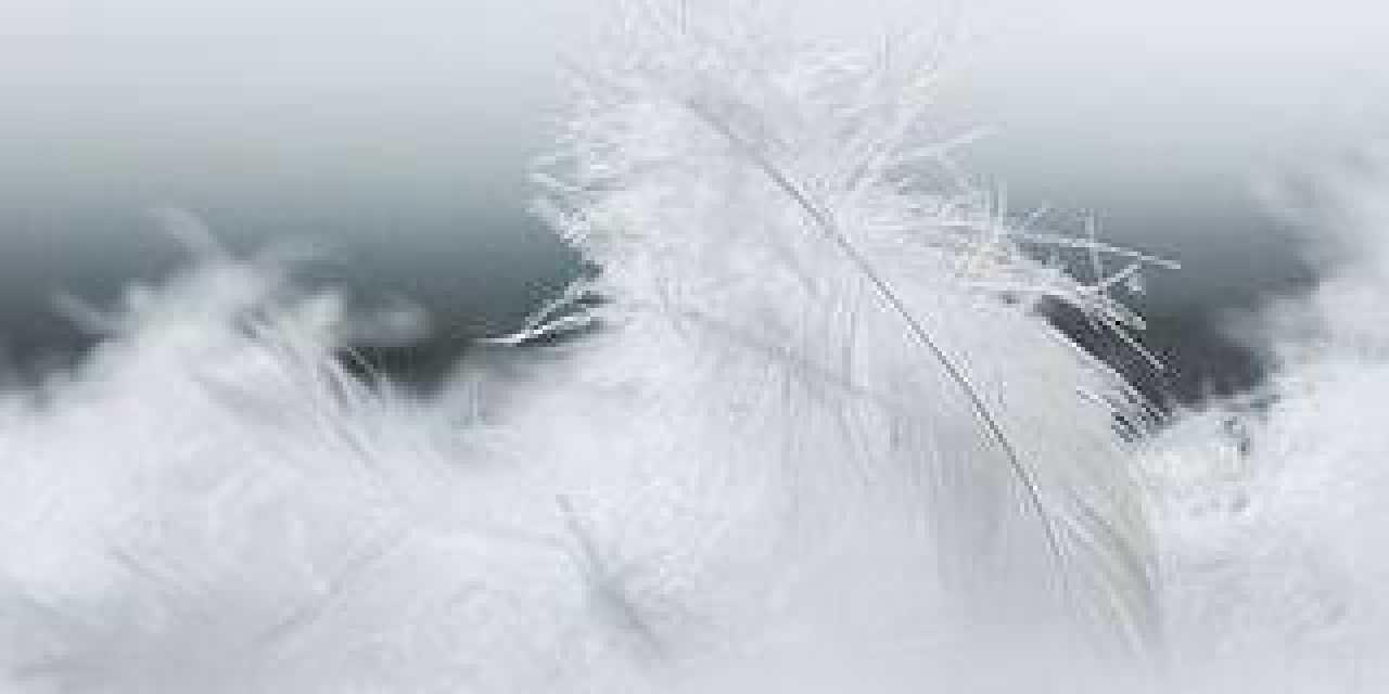 Les effets de la plume dans la « Haute Literie »