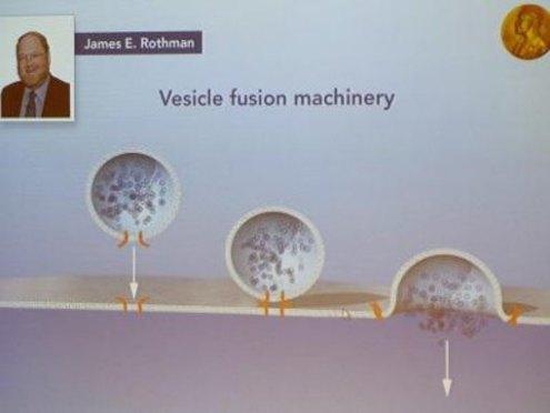 Transportmechanismus in Zellen