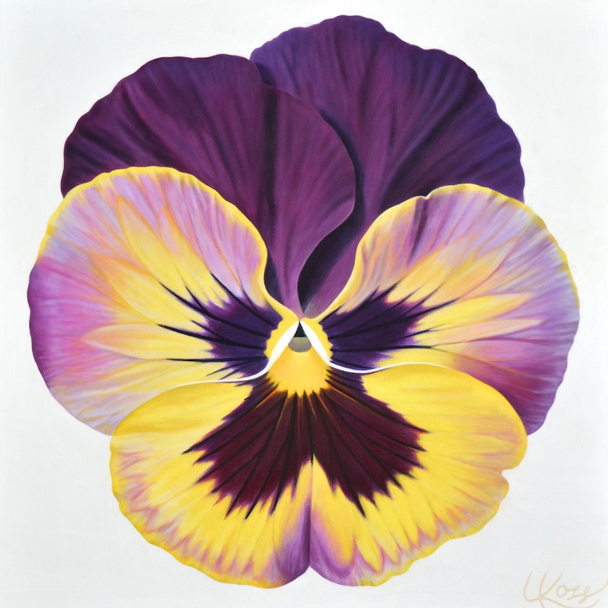 Pansies Laurie Koss