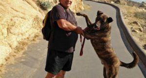 Un chien sauve un sans-abri pris au piège entre des rochers