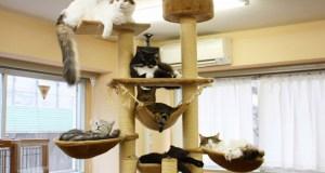 Un café à chats à Tokyo, Japon