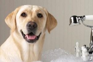 lavare il tuo cane