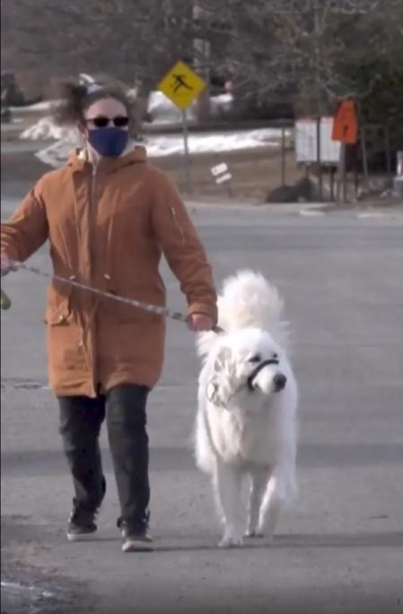Haley y Clover se encontraban de paseo cuando sucedió el incidente.