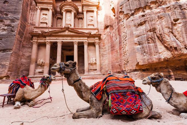 Los camellos descansan en el complejo arquitectónico de Petra, en Jordania