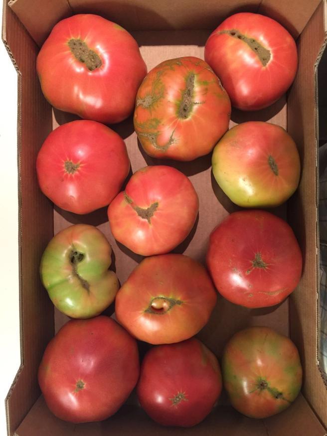Los tomates de Javier han tenido una buena acogida