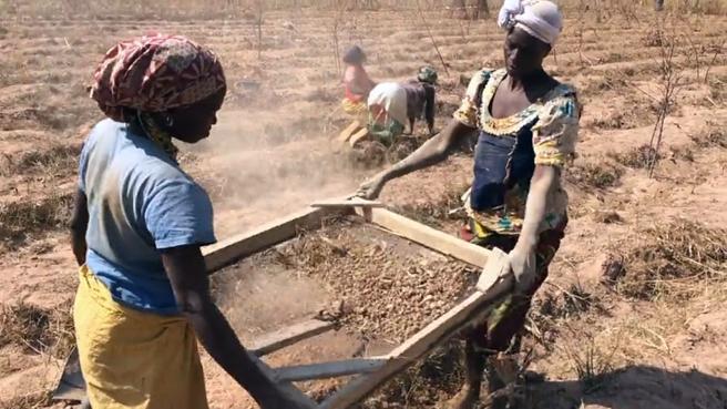 Mujeres trabajando en el cultivo de la chufa en África. Captura del documental 'Mousso Faso'