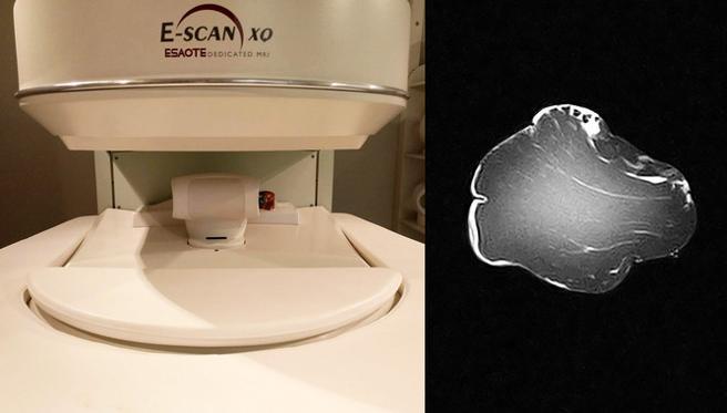 La calidad de un lomo se puede predecir introduciéndolo en un escáner MRI y analizando su imagen de resonancia magnética
