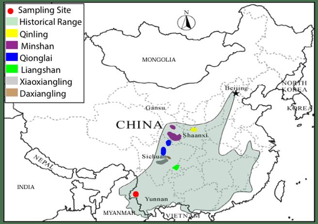Los osos panda sólo viven en estado salvaje en China