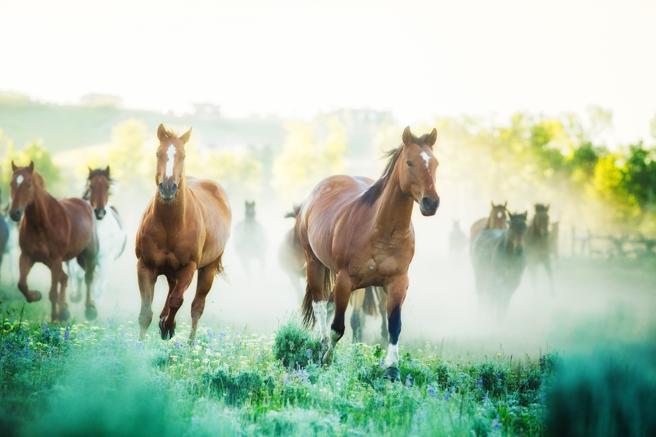 Imagen de recurso de un grupo de caballos en libertad