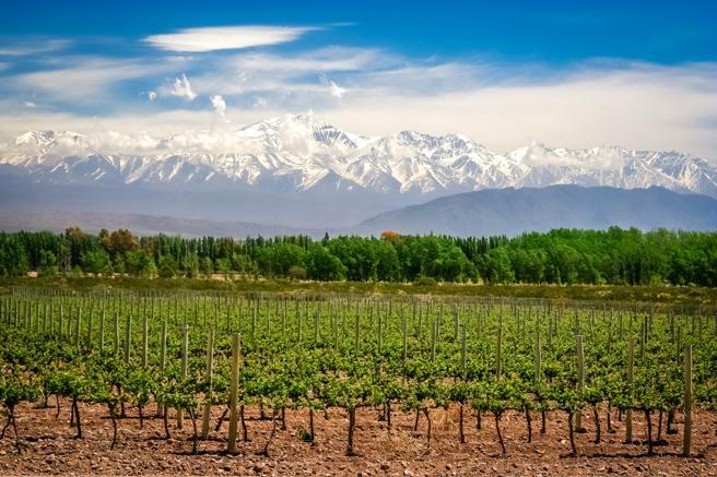 Un viñedo cerca de Mendoza, con los Andes de fondo