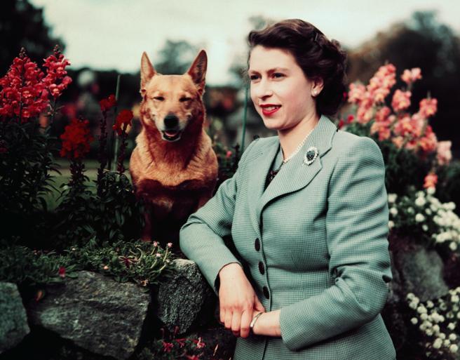 Los más de 30 corgis que ha tenido la reina Isabel II estaban emparentados con Susan, su primera perra