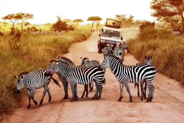Es muy importante tener un guía durante los safaris