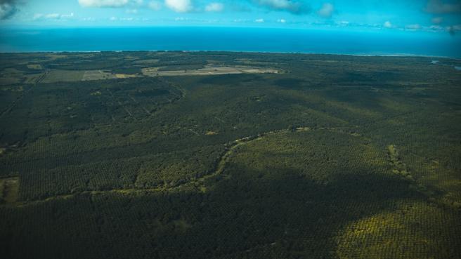 Plantaciones de palma africana en La Muskitia (Honduras), junto al mar Caribe. En Honduras hay unas 200.000 hectáreas dedicadas al cultivo de la palma africana. A estas extensiones se las conoce como deserto verde debido al daño que la palma crea en la tierra.