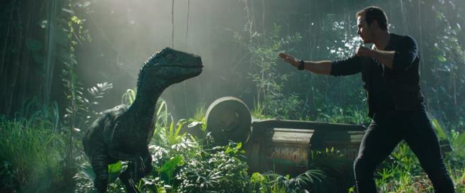 The character of Chris Pratt returns to meet with the velocirráptor Blue in 'Jurassic world: The kingdom fallen'