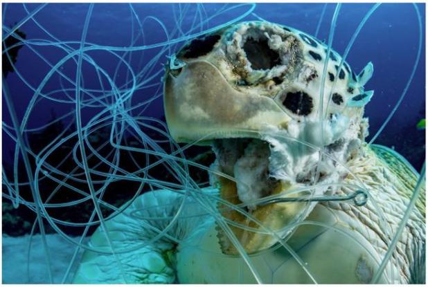 Víctima. Título de la fotografia galardona con el primer premio en el apartado Conservación de la Ocean Art Underwater Photo Competition