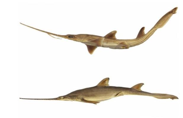 Representación de ejemplares de las especies descubiertas