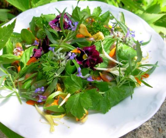 Elizabethan English Herb and Flower Salad With Honey Dressing