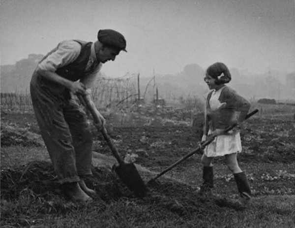 Digging for Victory on Hampstead Heath