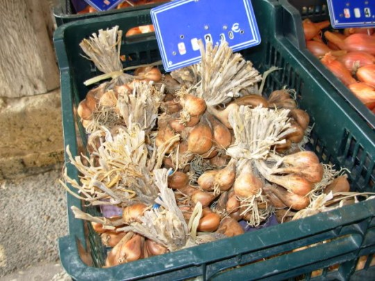 Bunches of Shallots, Cozes Market, SW France