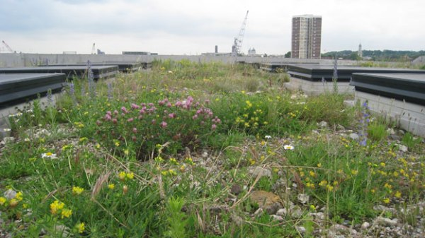 Green Roof Top London