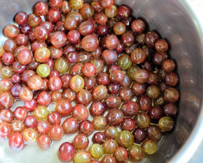 Pink Gooseberries