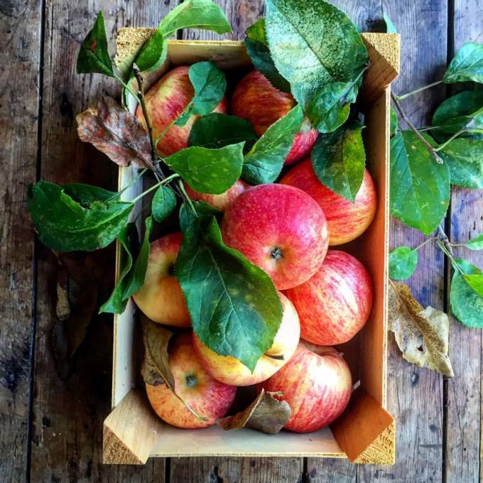 Coxes Orange Pippins Apples