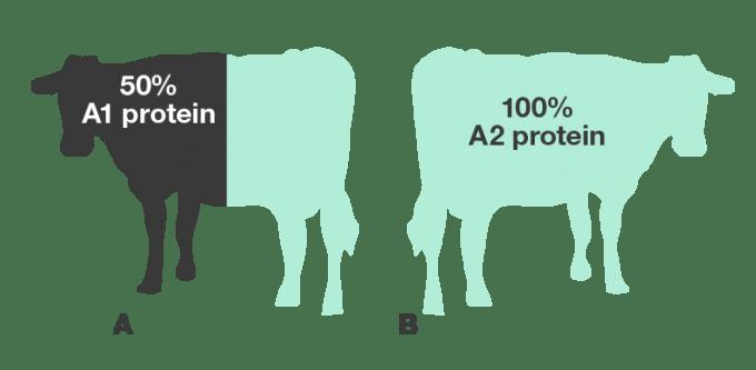Figure-1-cow-blue-JAN-2015