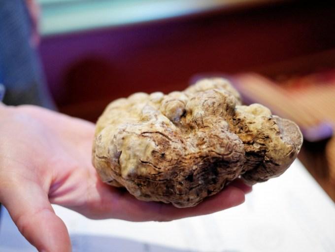 Giant sized White Truffle from Alba