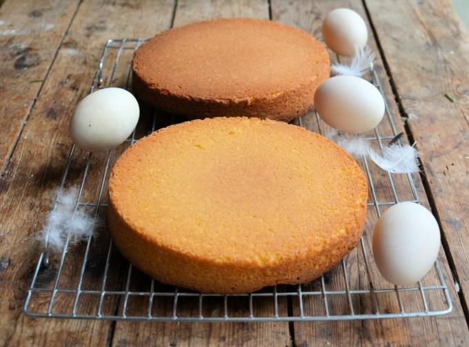 Duck Egg Sponge