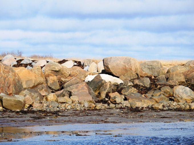 Bear sleeping in the rocks
