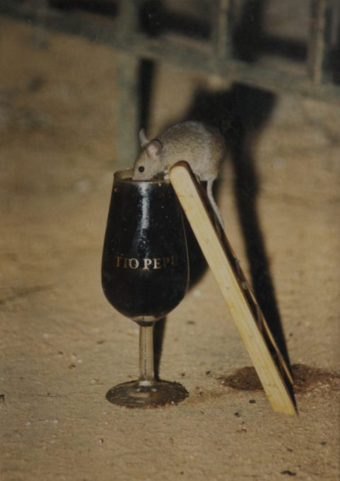 Tio Pepe Sherry Drinking Mouse