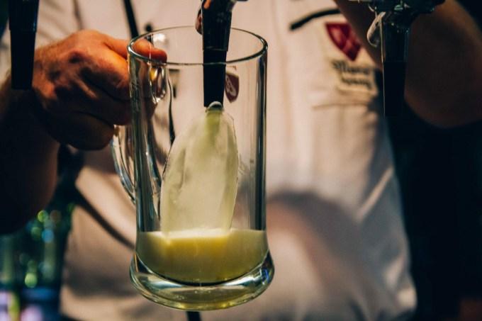 Pouring the stein of Budweiser Budvar