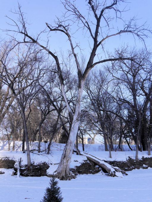 Red River Mutual Trail, Winnipeg