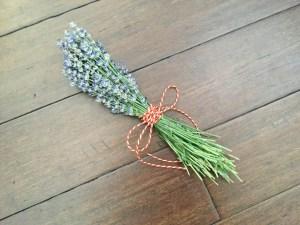 Harvesting Lavender Bunch