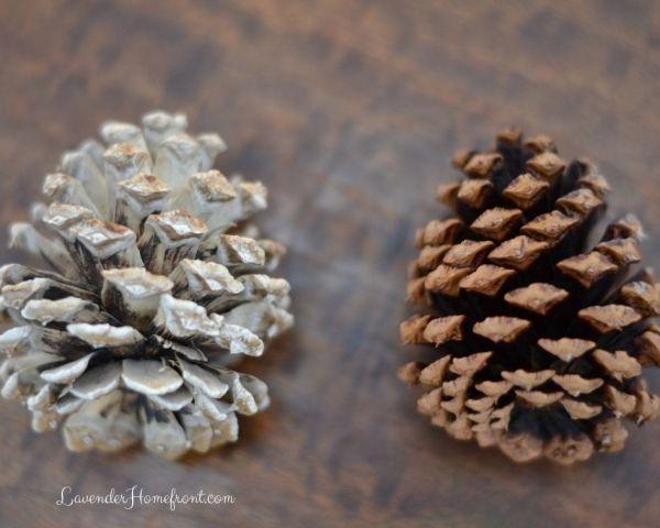 Bleached Pinecone versus Natural Pinecone