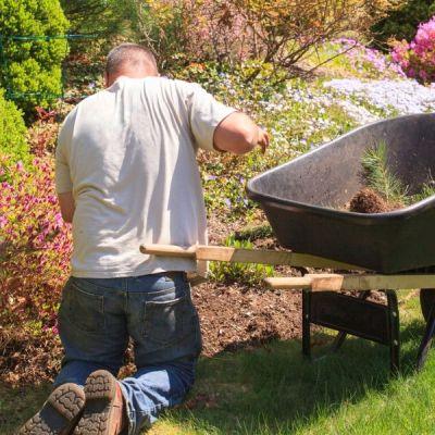 man weeding the garden with wheelbarrow