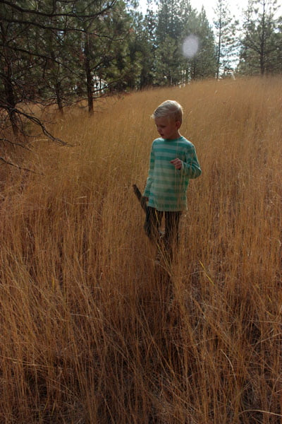 Boy in Field within Forest