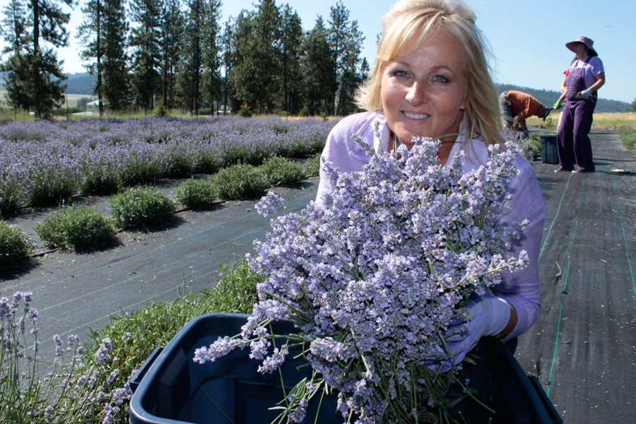 Owner, Sandra Shuff, with Bundle of Lavender