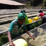 エチオピア イルガチャフィーG1セレクションの写真