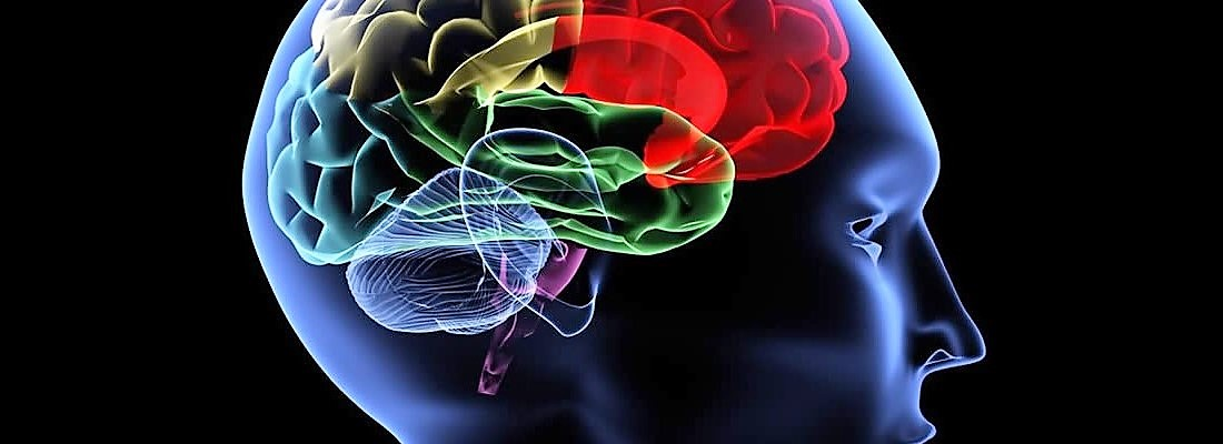 ll cervello umano