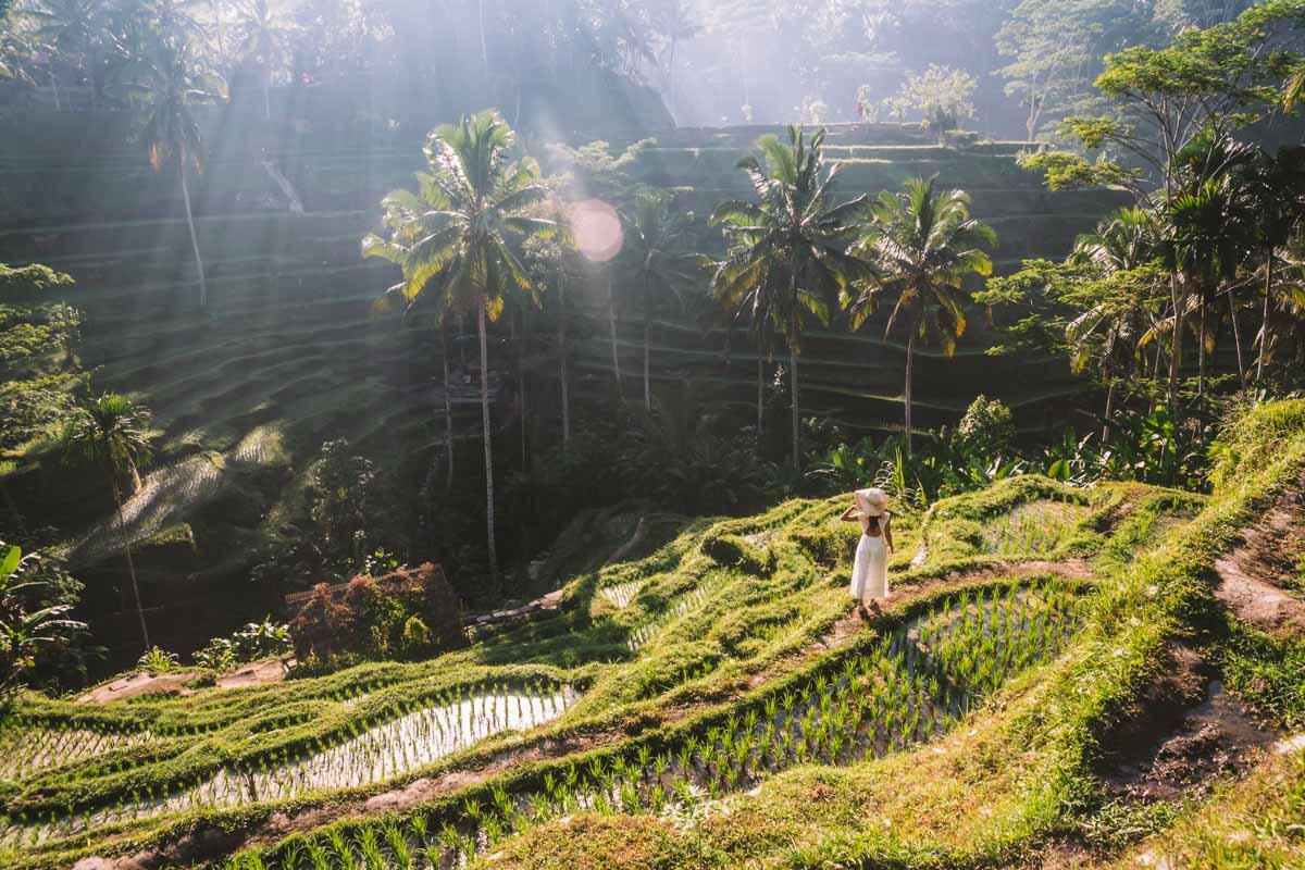 Le Terrazze Di Riso Di Ubud A Bali Una Vallata Mozzafiato A