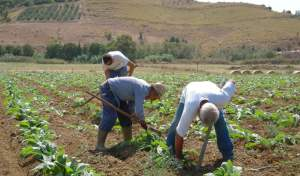 agricoltura-campo