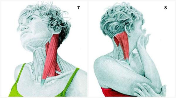 Estiramientos musculares cuello